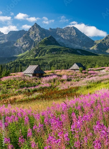Fototapeta Tatra mountains, Poland landscape, colorful flowers and cottages in Gasienicowa valley (Hala Gasienicowa), summer obraz