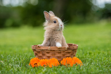 Little funny rabbit sitting in the basket