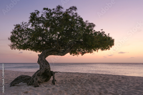 Платно The famous Eagle Beach divi divi tree of Aruba