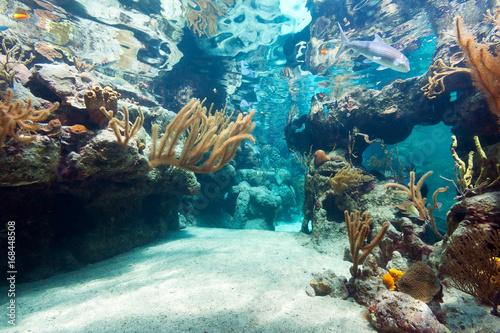 Staande foto Koraalriffen Beautiful coral reef in sea, Mexico
