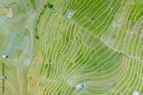 zdjecie-lotnicze-widok-z-gory-z-latajacego-drona-zielonych-pol-ryzowych-na-wsi-ziemia-z-uprawianych-roslin-nieluskanego-i-morza-mgly-w-pa-pong-piang-tajlandia