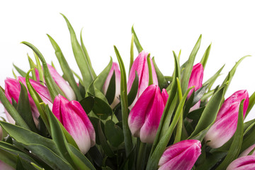 Fototapeta Tulipany Beautiful bouquet of pink tulips at white background isolated, mother's Day