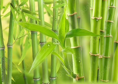 bambusowy-las-z-liscmi