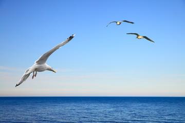 Fototapeta Do hotelu Flying seagulls