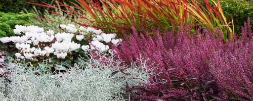 La pose en embrasure Grenat Herbst - Blumenbeet - Erika und Silberblatt