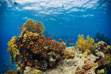 Beautiful coral reef with sealife