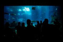 Silhouettes Of People Against A Big Aquarium.