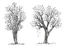 Trees Autumn Hand Drawing Vect...