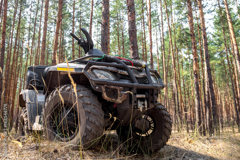 ATV Quadbike in a pine forest. Summer time.