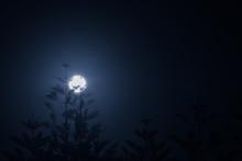 Scenic Night View Of Pine Tree...