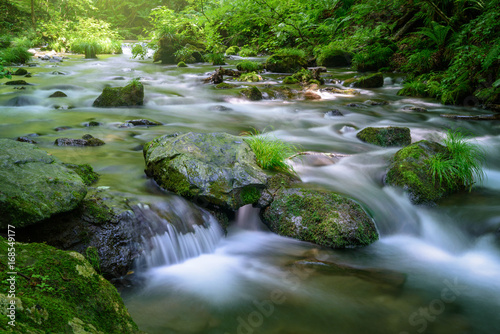 Fotografering  森の渓流