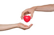 canvas print picture - Heart transplant and organ donation concept. Hand is giving red heart. Isolated on white background.