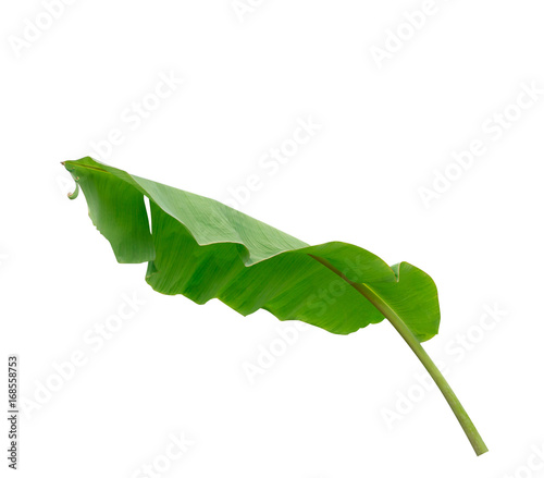 Poster Geometric animals Green banana leaf isolate on a white background with clipping path.