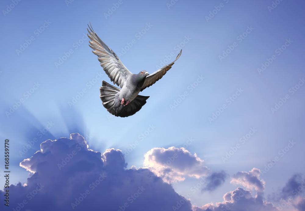 Dove in the air symbol of faith over shining sun
