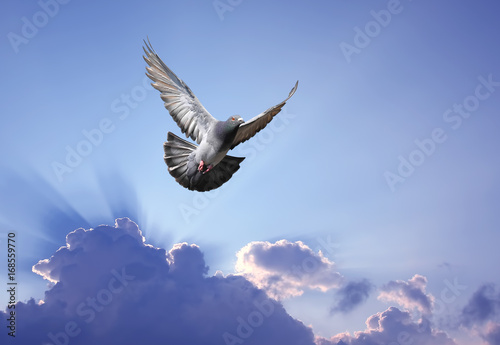 Dove in the air symbol of faith over shining sun