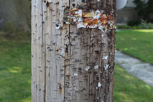 Stapled Telephone Pole
