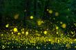 Leinwanddruck Bild - Many fireflies flying in the forest.(It's like a light falls)
