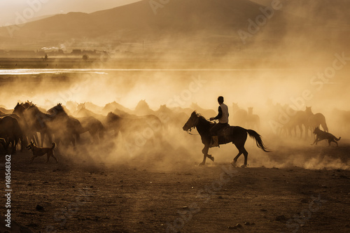 Fotografia Wild horses of Cappadocia at sunset with beautiful sands, running and guided by