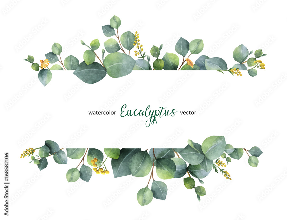 Fototapeta Watercolor vector green floral banner with silver dollar eucalyptus leaves and branches isolated on white background.