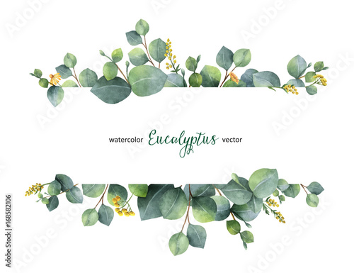 Obraz Watercolor vector green floral banner with silver dollar eucalyptus leaves and branches isolated on white background. - fototapety do salonu
