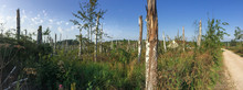 Panoramic Shot Of The Forest D...
