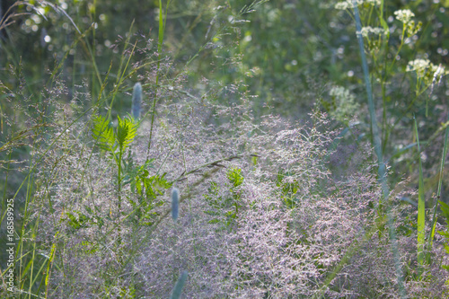 Spoed Foto op Canvas Khaki landscape morning grass