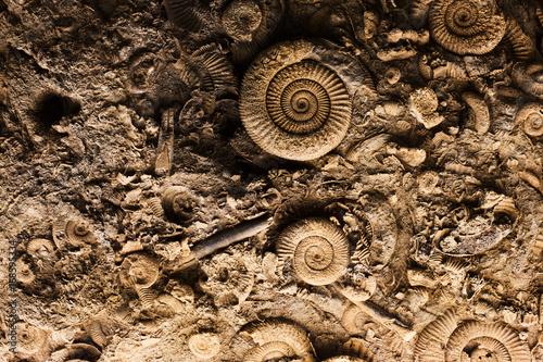Fotografering  Fossils in rock