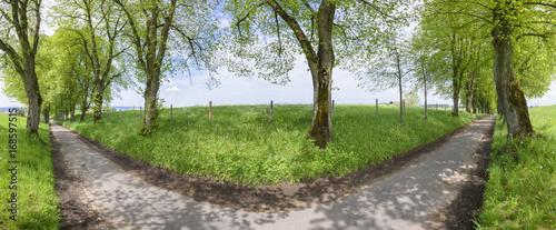 Fototapeta  Panorama einer alten Baumallee mit Linden im Allgäu