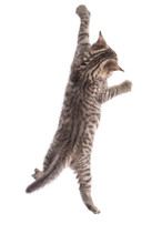 Funny Cat Hanging On White Background
