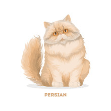 Isolated Persian Cat.