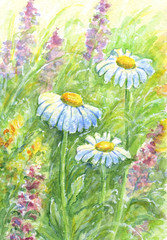 Obraz Wild flowers - watercolor painting.