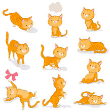 Cute Cat In Various Poses. Car...