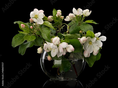 Apple-tree flowers in glass vase