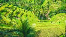 Amazing Tegalalang Rice Terrac...