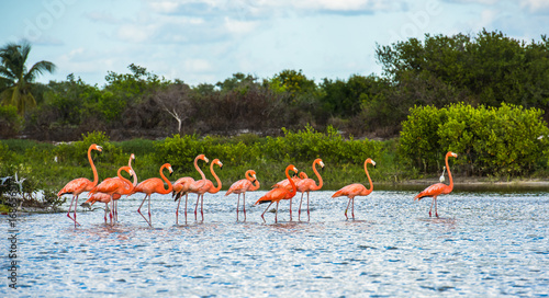 Canvas Prints Flamingo Flamingoes at Celestun Biosphere Reserve, Yucatan, Mexico