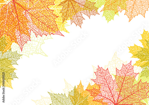 Obraz Autumn background and leaves of a maple - fototapety do salonu