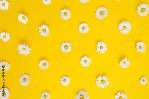 In de dag Madeliefjes Floral pattern of white chamomile daisy flowers on yellow background. Flat lay, top view. Floral background. Pattern of flower buds.