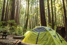 Tent Under A Dense Redwood For...