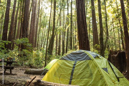 Obraz Tent under a dense redwood forest in a California campground - fototapety do salonu