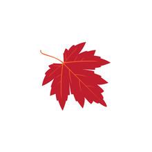 Red Maple Autum Leaf