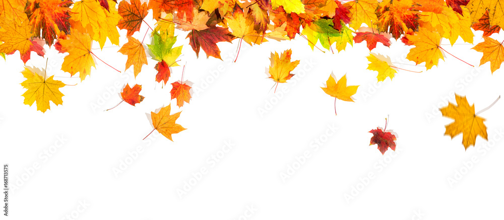 Fototapety, obrazy: autumn leaves background