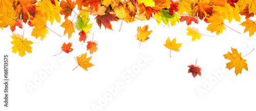 Fototapeta autumn leaves background obraz
