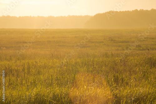Staande foto Meloen sunset in the field