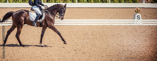 Fototapeta Black horse portrait during dressage competition. Dressage horse, advanced dressage test.  obraz