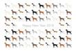 2018年 年賀状 戌年 犬の種類 イラスト