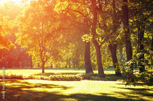 Foto op Canvas Baksteen Autumn landscape, autumn park in with golden autumn trees lit by sunlight