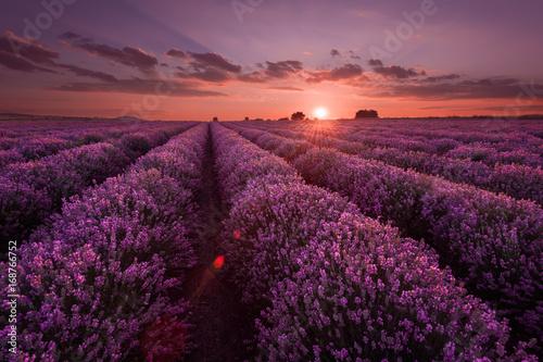 Spoed Foto op Canvas Violet Lavender fields. Beautiful image of lavender field. Summer sunset landscape, contrasting colors. Dark clouds, dramatic sunset.