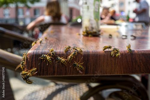 Fényképezés Wasps in a cafe