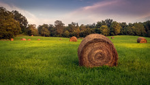 Round Hay Bales In A Grassy Me...