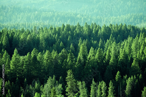 Fotografia Forest in the Wilderness Mountain